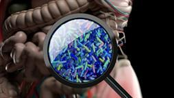 microbioma-intestino-probioticos