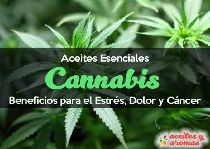 aceite-de-cannabis-beneficios